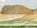 廣東龍川大型黃臘石 2