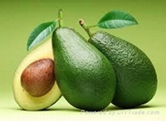 FRESH AVOCADO WITH BEST PRICE AND HIGH QUALITY