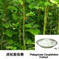Polygonum Cuspidatum Extract 2