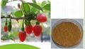 Wolfberry fruit Extract  2