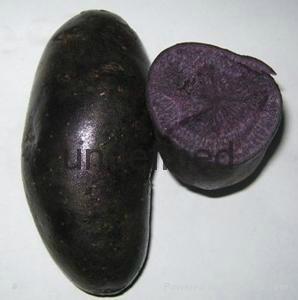 求购马铃薯土豆 1