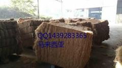 天津棕櫚絲