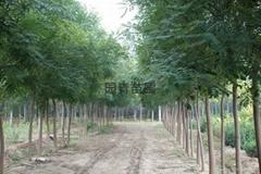 經濟開發區園青苗圃