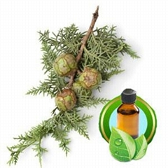 100% Pure Cypress Essential Oil