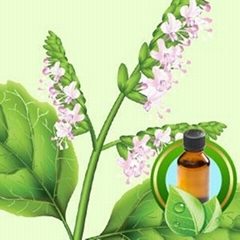 100% Pure Patchouli Essential Oil
