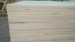 山东杨木整芯胶合板