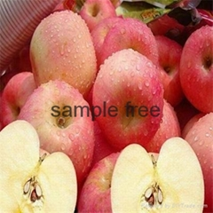 Fuji red apple at cheap price