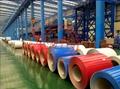 ASTM A755/EN10619 COLOURED PREPAINTED GALVANIZED(PPGI) Coils