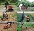 7HP multi purpose gasoline agricultural tiller cultivator rotovator 5