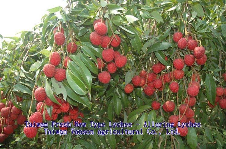 2015 Taiwan Fresh Lychee - Alluring Lychee 1