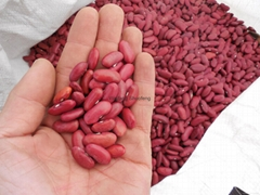 non-GMO Red Kidney Beans high quality best price