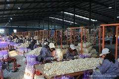 Jinxiang,Jining  fresh normal white garlic5.0-6.5cm
