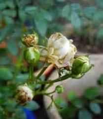 organic pesticide for garden Gardening Pesticide