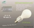 Induction Light Bulb