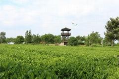 湘潭市嘉湘茶葉有限公司