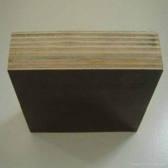 Best price  film faced plywood