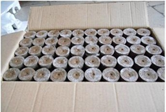cocopeat pellets