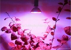 PAR Series LED Grow Bulbs