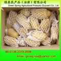 Export Fresh Potatoes