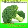 Export Fresh Broccoli 8kg/foam box 3