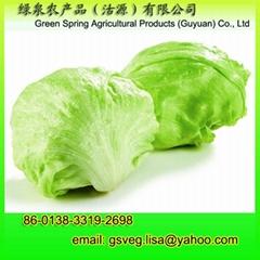 Fresh Iceberg Lettuce