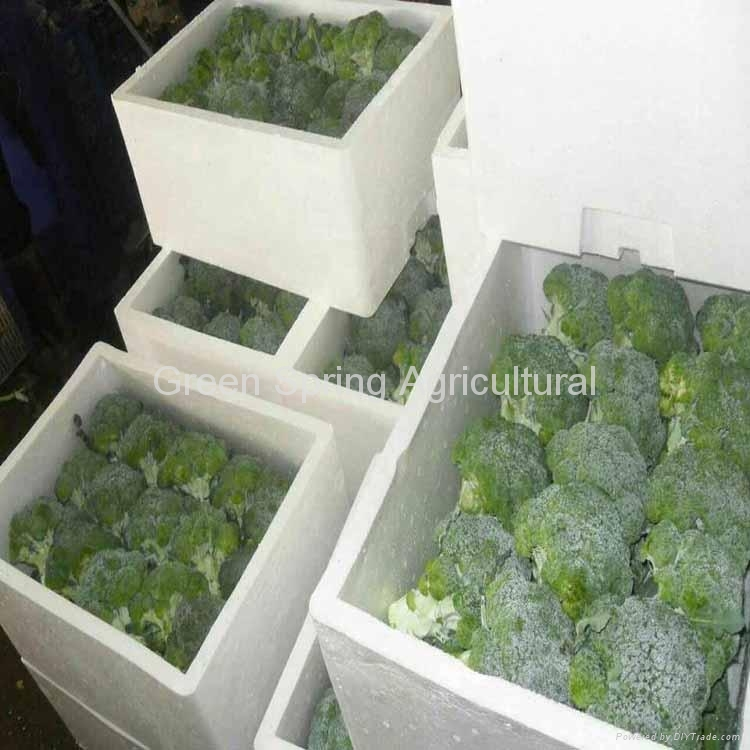 Export Fresh Broccoli 8kg/foam box 1