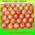 Export Fresh Onion