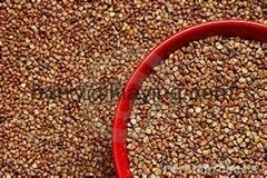 Buckwheat of China