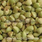 Green buckwheat 1