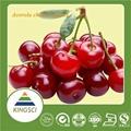 針葉櫻桃提取物17% 25%