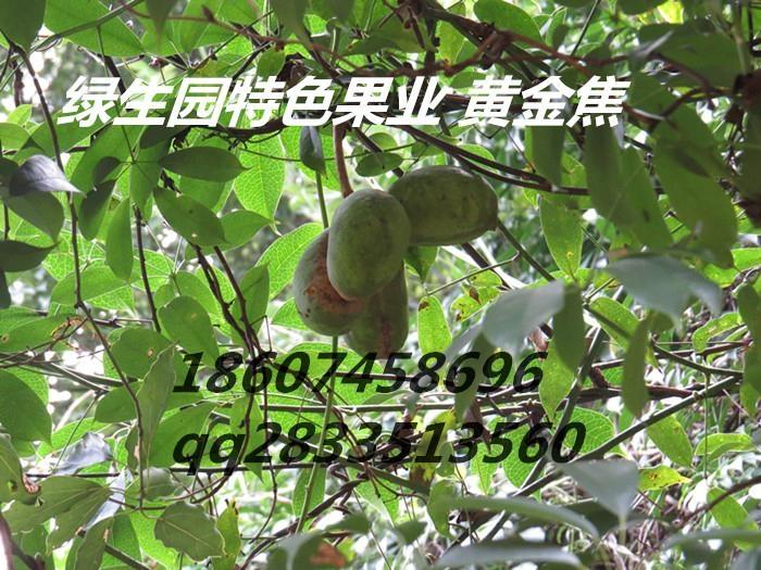供应九月瓜种苗 2