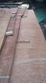 供应球纹沙比利木皮 1