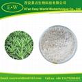 Aloe vera freeze-dried powder 1