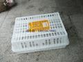 供应福建泉州塑胶成鸡笼