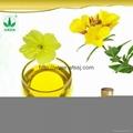 Evening Primrose Oil with Best Price