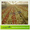 hot sale poultry Broiler poultry farming