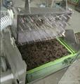 盆栽蔬菜穴盘育苗播种基 2