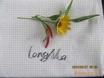 TC 65/35 45*45 110*76 poplin plain pocketing ,lining fabric 3