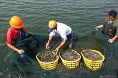 emulsifier-fish feed additive