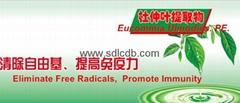 eucommia leaf extract