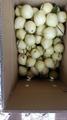 Fresh Ya Pear from China 2