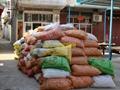 大量供应岑溪软枝油茶种子 2