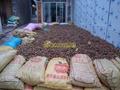 大量供应岑溪软枝油茶种子 4