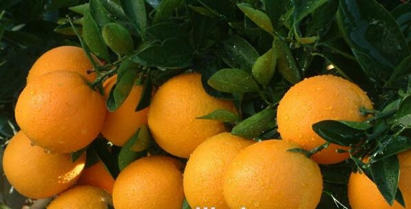 DIYTrade free sample new products orange powder sost supply 4