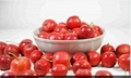 high quality hot new products for 2015 hawthorn fruit extract 2