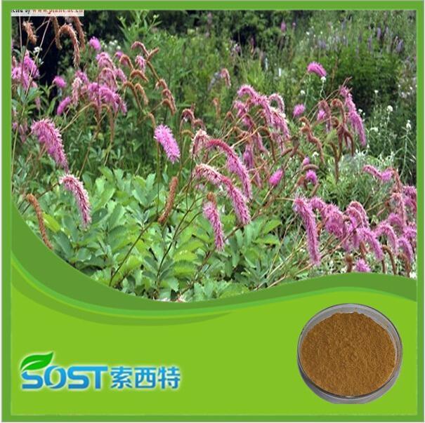 herbal medicine extract Radix Sanguisorba Extract 1