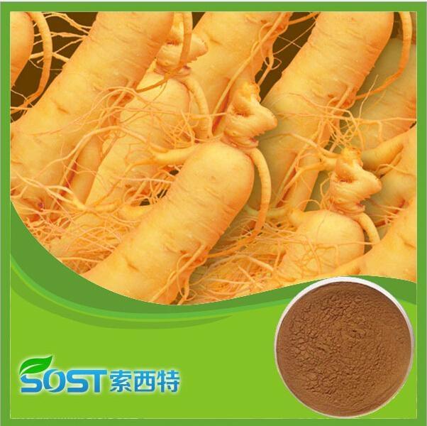 Alibaba China supply Ginseng root extract 1
