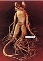 Alibaba China supply Ginseng root extract 2