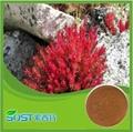 Cosmetic grade 10% Rhodiola rosea extract salidroside rhodiola rosea extract 4