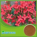 Cosmetic grade 10% Rhodiola rosea extract salidroside rhodiola rosea extract 5